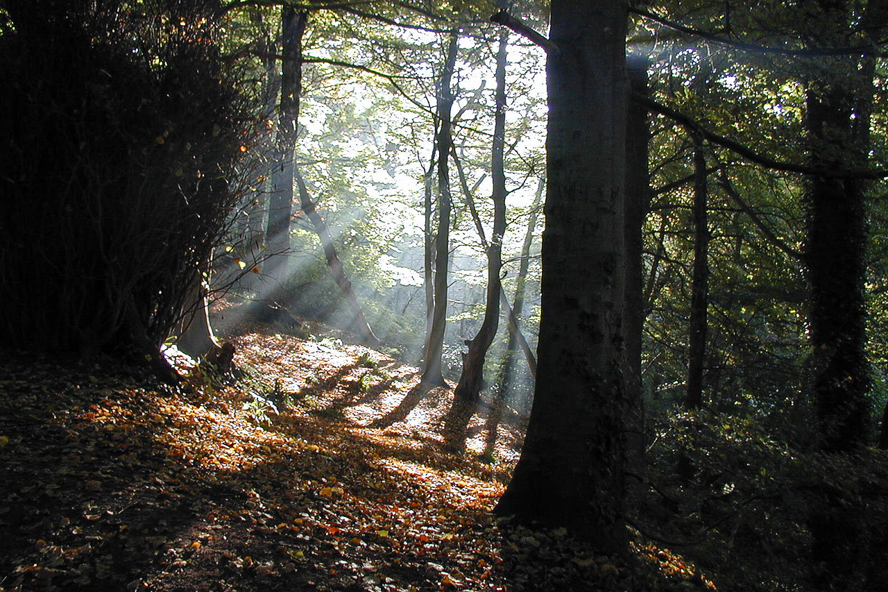 Sun rays in Gelt Wood