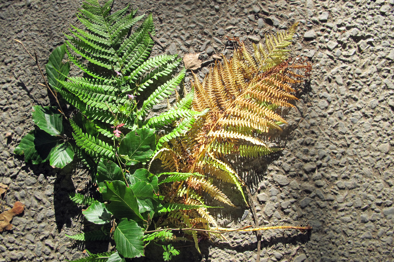 Fern and leaf collage